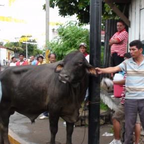 Las Vacas Culonas y la participación sandinista